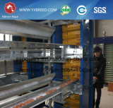 Venta china de Cags del pájaro del equipo de la avicultura del equipo de Agricutural