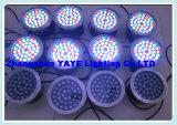Da piscina subaquática quente do diodo emissor de luz Light/LED do Sell 6W de Yaye 18 lâmpada subaquática do diodo emissor de luz luz/6W com Ce/RoHS