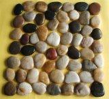 Pietra Polished del mosaico del ciottolo per la pavimentazione esterna con il multi colore