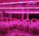 La couleur 4FT DEL de Red&Blue élèvent la lumière de tube pour la croissance de plantes