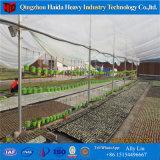 Invernadero vegetal de la película plástica para la venta