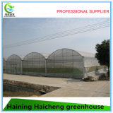 Multi Span Agricultura Folha Plástica Vegetable Green House