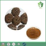 100% 자연적인 고품질 아름다운 Sweetgum 과일 추출 또는 Sweetgum 과일 P.E. /Beautiful Sweetgum 과일 P.E. 4:1 ~20: 1
