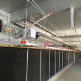Casa de pollo de marco de acero con equipos