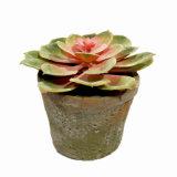 Kunstmatige Installatie Succulents in Verschillende Potten voor de Decoratie van het Huis/van het Bureau