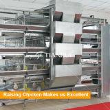 Cage spéciale de poulette de modèle pour la poulette de couche soulevant le matériel