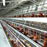 Equipamento da exploração avícola para camadas e grelhas