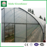 농업 다중 경간 채소밭 플라스틱 녹색 집