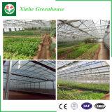 Chambre verte agricole hydroponique de Multi-Envergure de Double-Film de qualité