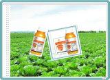농약 살균제 정립 Sc Difenoconazole & Azoxystrobin