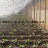 Bande d'irrigation par égouttement d'économie de l'eau pour la Chambre verte