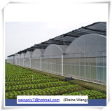 A estufa da película plástica de preço de fábrica verteu para a agricultura