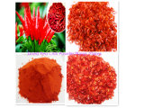 Hersteller-rotes Paprika-Puder und Paprika-Puder