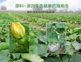 Reine natürliche/grüne Nahrung/gutes Geschmack-Kürbis-Gemüsesaft-Puder