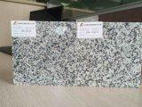 Granito grigio di Gray delle mattonelle/lastre G603 ab del granito