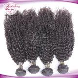 Nenhuma tecelagem Mongolian de trama dobro de derramamento do cabelo humano
