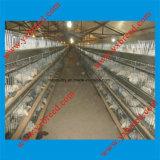 Gabbia di batteria calda della griglia del pollo della strumentazione del pollame di vendita