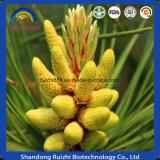 Cápsula suave de las comidas sanas de la belleza de polvo roto del polen del pino de la pared celular