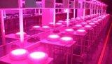 a luz do diodo emissor de luz do Gp 70-75W para a planta cresce interna cresce lâmpadas