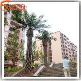 Palmier artificiel de datte de modèle de décoration neuve de maison