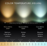 아크릴을%s 가진 장식적인 현대 LED 펀던트 가벼운 검정