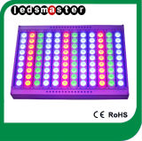 Hoge Power 600W RGB Flood Light met Dali/DMX/PWM