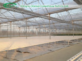 Europäisches Style Hydroponics Greenhouse für Sale