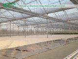 Sale를 위한 유럽식 Hydroponics Greenhouse