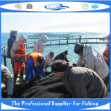 深海の水産養殖のケージの/Seaのケージ(20130713_150101)