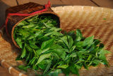 Thé de Puer/mini thé comprimé en forme de cuvette/thé de régime