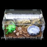 Gabbia acrilica superiore del Terrarium del rettile da vendere