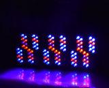 Hydroponic 점화 1000 와트 LED 가득 차있는 스펙트럼 5W 칩을 증가하십시오