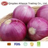 Abgezogene purpurrote Zwiebel mit Qualität
