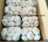 Ajo blanco normal de la nueva cosecha/puro rojo fresco chino