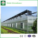農業または縦の庭またはHydroponicsシステム/Vegetable/FlowerのためのVenloのタイプ構造によって電流を通される鋼鉄管のマルチスパンのガラストンネルの温室