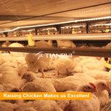 Pollame che alza le case prefabbricate del pollo da carne con la gabbia del pollo da carne