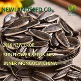 熱い販売のすべての世界への中国の新しいヒマワリの種363