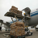 Service d'expédition de fret aérien de ligne aérienne de Lufthansa vers la Guyane