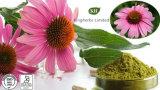 Acido naturale di 100% Chicoric, polifenoli (alta qualità, prezzo più giusto)