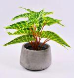 Hojas artificiales hermosas de las plantas en crisol del cemento