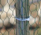 Rete metallica esagonale galvanizzata elettrotipia per la gabbia