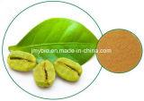 De Groene Bonen van uitstekende kwaliteit van de Koffie Extract/50% Totale Chlorogenic Zuren