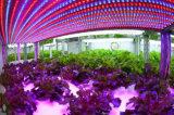 O diodo emissor de luz cheio do espetro cresce a luz do poder superior para a fábrica da planta