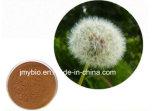 직접 공장은 1%-10%의 Flavones를 공급한다; 20% Phytosterols 민들레 추출 분말