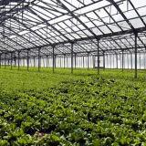 Venlo 플레스틱 필름 식물성 성장하고 있는을%s 다중 경간 온실