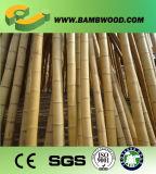 Roher natürlicher gelber Bambuspole