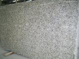 Grande parete del granito delle lastre/lastre della pavimentazione grandi