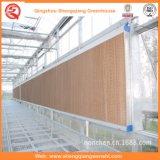 Abkühlende Auflage/nasser Auflage-/Wasser-Vorhang für Gewächshaus