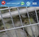 Оборудование для юга - американская ферма цыплятины клетки цыпленка бройлера автоматическое