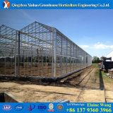 Alaun-Stahlrahmen-Glasgewächshaus für Blumen mit Wasserkultursystemen